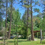 Woodland Park picnic area